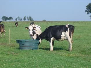 La contractualisation laitière imposera la version 2012 à tous les éleveurs