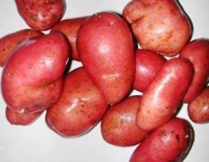 Cet hiver, regain d'intérêt pour la pomme de terre