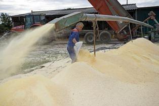 Chantier de broyage de grains de maÏs.