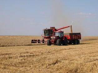 Les prix agricoles en hausse suite à la reprise de la demande