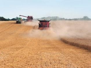Le maïs, le soja et le blé se replient, inquiétude pour l'Europe