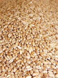 Le soja continue de baisser, le blé et le maïs montent