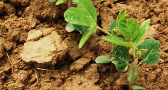 Les produits agricoles en légère hausse dans un marché calme