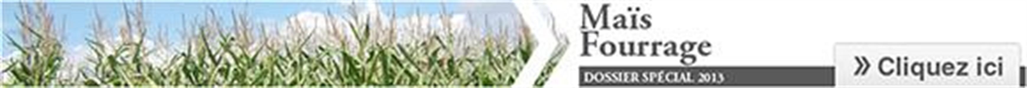 Cliquez sur l'image pour accéder au Dossier Spécial Maïs fourrage