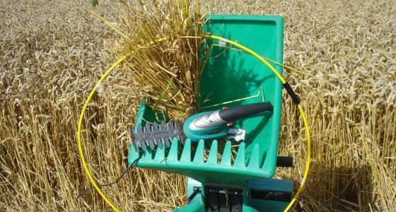 Qualifier sa récolte avant la moisson