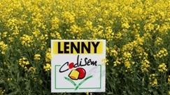 L'offre colza pour la France s'étoffe de lignées et d'hybrides