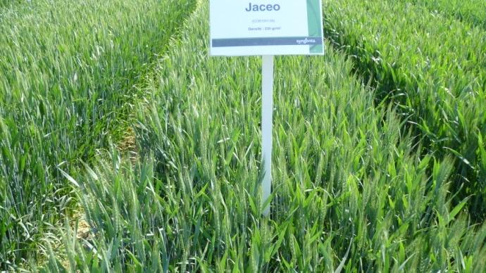 Focus sur les orges hybrides mais des inscriptions également en blés