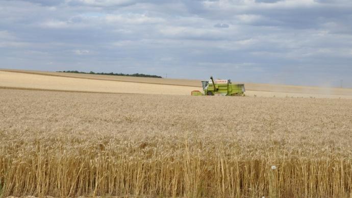 Cinq nouveaux blés durs réservés à certains créneaux de qualité