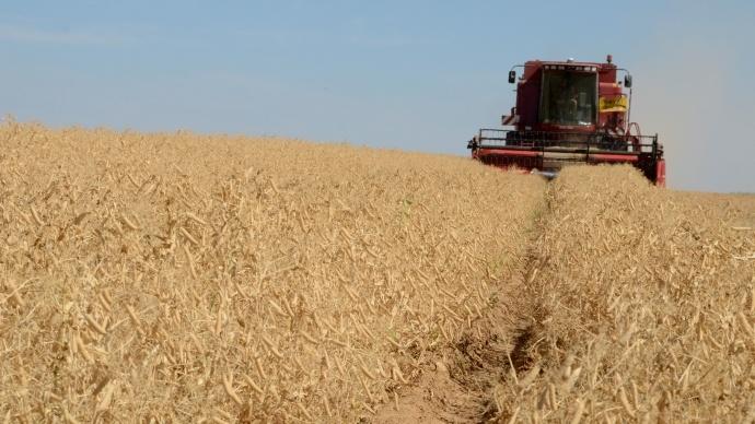 Récolter le grain à la bonne teneur en eau
