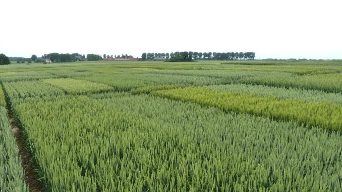 Les résultats de rendement 2013 des variétés testées