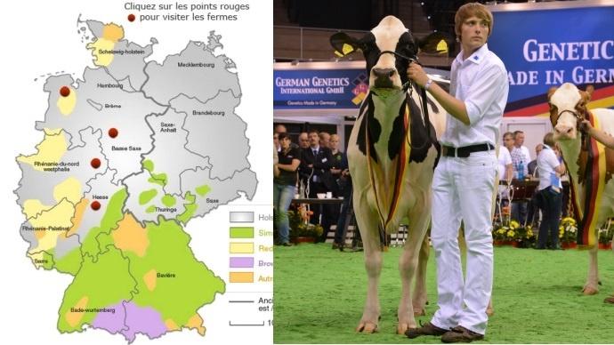 Allemagne laitière