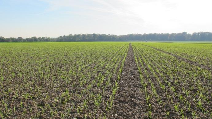 Date et densit de semis du bl densit de semis de l 39 orge - Chambre agriculture poitou charentes ...