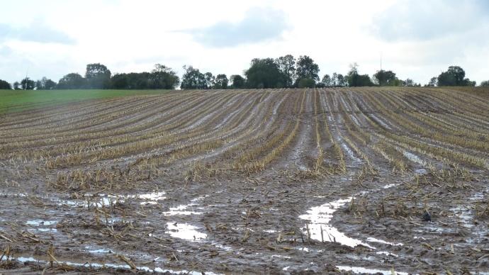 Des résultats en baisse pour le maïs et les betteraves