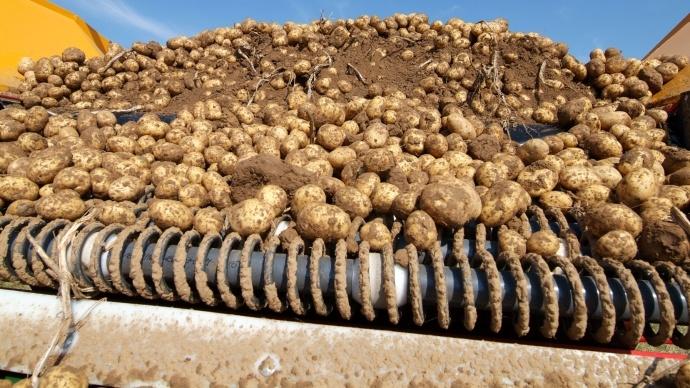 Aides pour construire un b timent de stockage pommes de terre - Conserver les pommes de terre ...