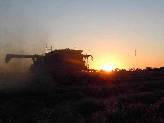 Réctole de céréales en Australie