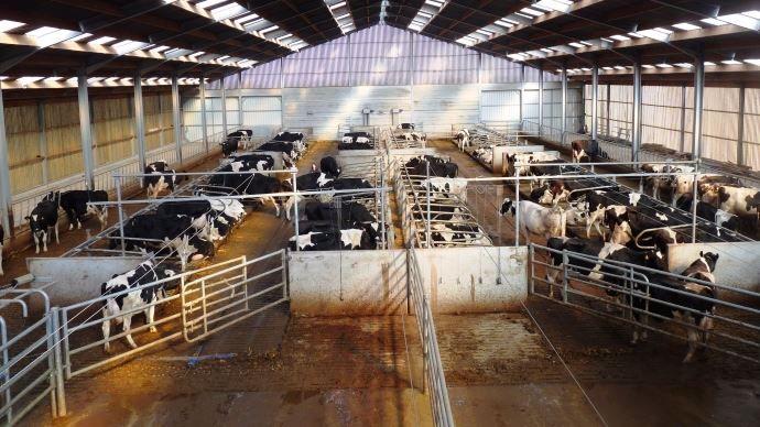 Bâtiments d'élevage